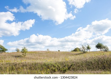 Sunny blue skies over a grassy field