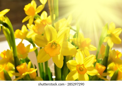 Sunny bunch of daffodils. Close-up. Selective focus