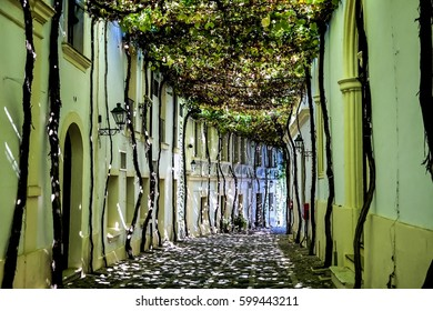 Sunny Bunnyes on the street covered by grape leaves, Jerez de la Frontera, Andalusia, Spain,