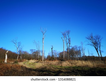 sunny clearing with several dead trees against a blue sky