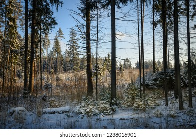 sunny and cold winter day, view inside of the forest
