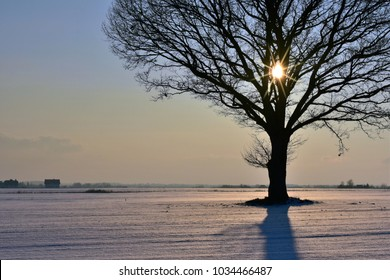 Sunny and cold winter evening in Lithuania. Lonely tree on a field.