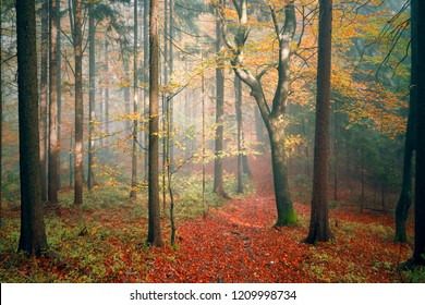 Sunny colorful autumn season fairytale forest landscape.