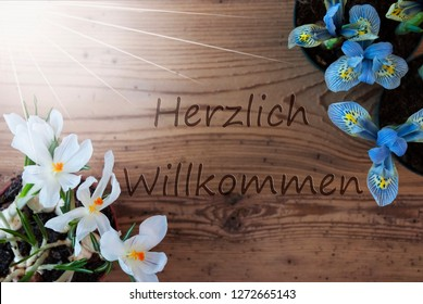 Sunny Crocus And Hyacinth, Herzlich Willkommen Means Welcome