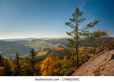 Sunny day in autumn forest, fields and meadow in bright yellow and green. Afternoon sunbeams on meadow. Warm sun light in countryside of Bohemian Moravian Highlands, Zdar Hills, Vysocina, Czech.