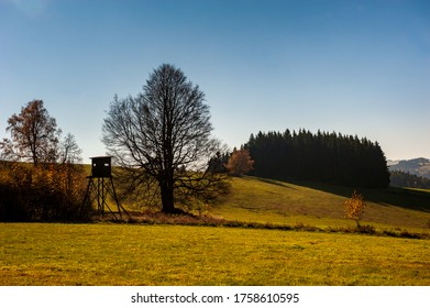 Sunny day in autumn forest, fields and meadow in bright yellow and green. Afternoon sunbeams on meadow. Warm sun light in countryside of Bohemian Moravian Highlands, Zdar Hills, Vysocina, Czech