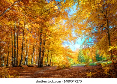 Sunny day in Autumnal forest, yellow orange trees. Real landscape of autumn