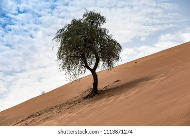 A sunny day with blue sky and patchy clouds over UAE's sand dunes.