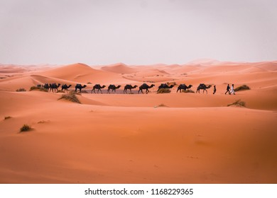 Sunny day in desert, Caravan going through the sand dunes in the Sahara Desert, Morocco
