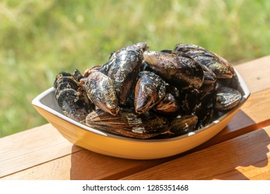 in sunny day, fresh mussels in yellow cup, standing at the garden table.
