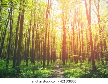 A sunny day in green forest