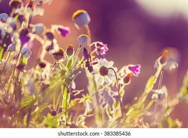 Sunny day in the meadow