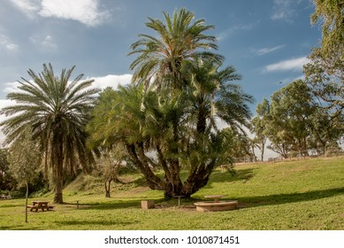 Sunny day off in the city park. Ashkelon.