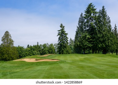 Sunny day on the golf course, fairway, green, and sand trap surrounded by trees