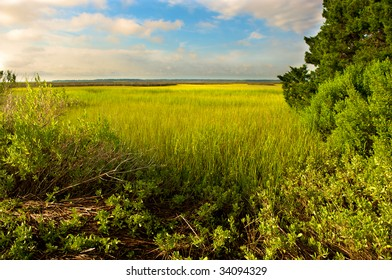 Sunny Day on the Marsh
