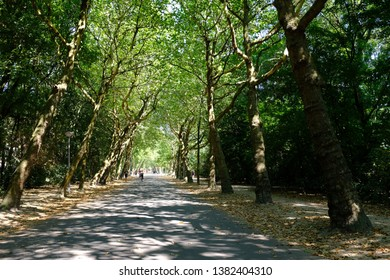 Sunny day on tree shaded bicycle path in Amsterdam vondelpark