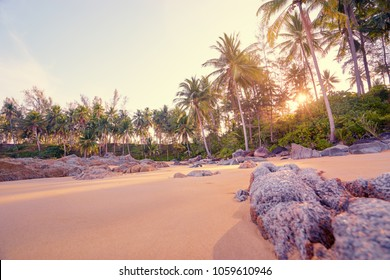 Sunny day on the tropical beach with cocnut palm trees.