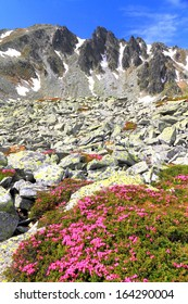 Sunny day with red rhododendron flowers on mountain slopes
