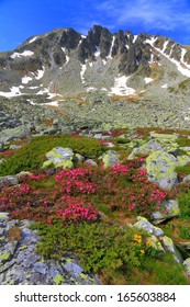 Sunny day and rocky valley covered with pink flowers