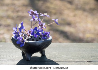 Sunny day of spring at countryside. Beautiful closeup of bouquet of blue liverleaf Hepatica nobilis Mill in unique handmade vase of black ceramic in sunlight on wooden board