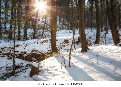 Sunny day in winter forest