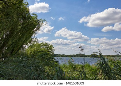 Sunny days, reed at the lake Schaalsee, in front of a blue sky, Mecklenburg, Vorpommern.