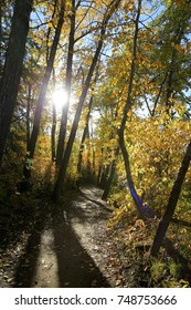 Sunny Fall Forest Path