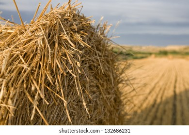 sunny field landscape with straw rolls