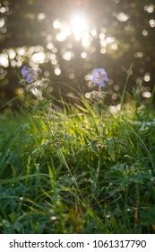 Sunny firest flower