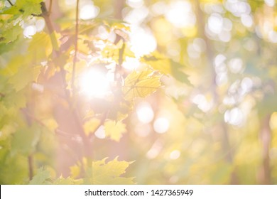 Sunny forest - bright rays of sun and green leaves