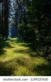 Sunny forest clearing at the Müritz National Park Hiking Trail near Wesenberg