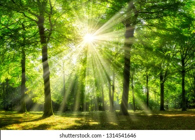 Sunny forest glade with sunlight shining through the tree crown