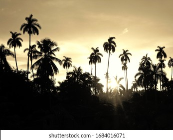 Sunny forest landscapes with palms silhouettes