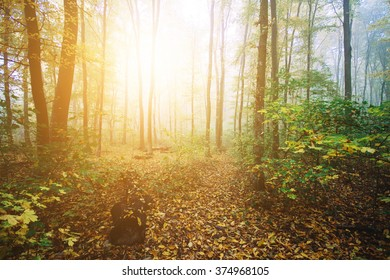 Sunny forest in the morning