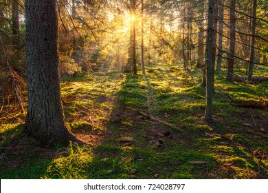 Sunny forest nature. Sunbeams in green forest. Sunlight through trees. Sunny autumn landscape.
