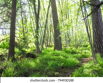 sunny forest in spring