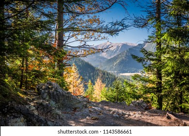 Sunny forest in Tatra mountains at sunrise, Poland