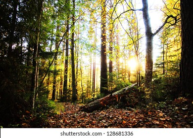 Sunny forrest