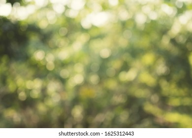 Sunny green abstract nature background. Blurred bokeh background from green forest. For montage product display.