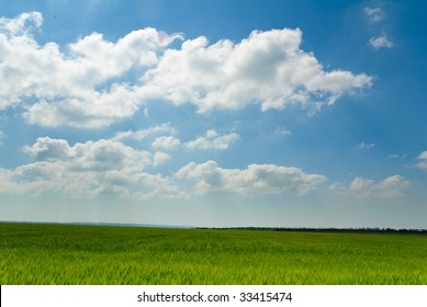 sunny green field