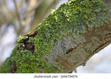 Sunny green moss on branch