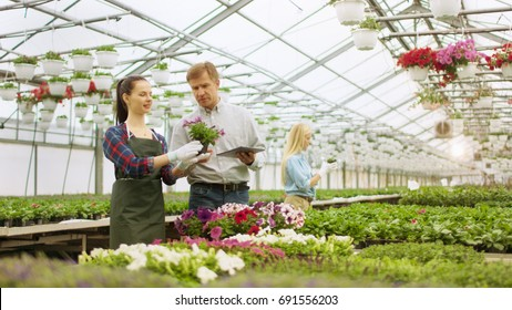 In a Sunny Greenhouse Beautiful Young Gardener Advertises/ Shows Flowerpot to a Respectable Businessman, He Uses Tablet Computer and Considers Making Big Order.