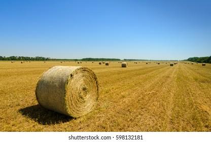 Sunny harvesting field