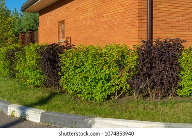 Sunny hedgerow along street in front of brick building
