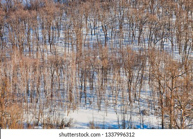 Sunny hillside with trees and snow in rural Minnesota