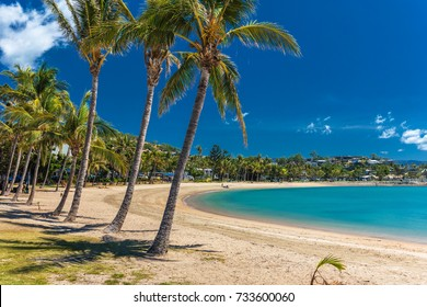 Sunny hot day on sandy beach with palm trees, Airlie Beach, Whitsundays, Queensland Australia