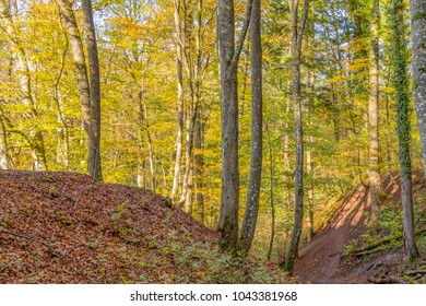 sunny illuminated idyllic colorful forest scenery in Southern Germany in the evening at autumn time