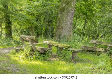 sunny illuminated idyllic forest scenery with dirt road, wooden bench and table at late summer time