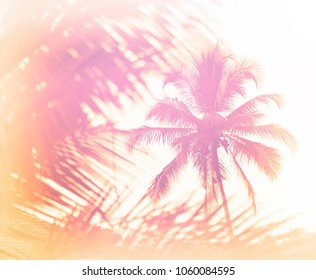 Sunny Indian palm tree closeup background