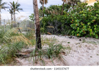 Sunny Isles Beach Oceanfront Park, building along coast in Miami, Florida evening, palm trees, one stray homeless cat lying in sand sleeping